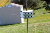 Picture of a Purple Martin birdhouse