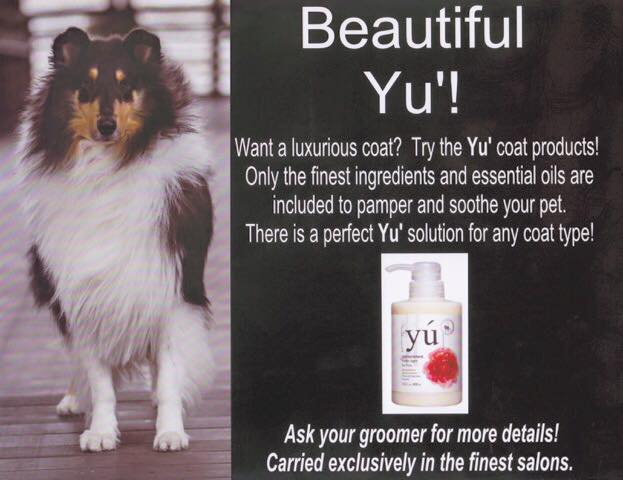 Picture of advertisement for Yu' with Beauty N' the Beasts' very own Pancho is their featured model.